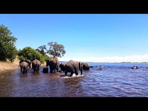 Elefanten Chobe Nationalpark Botswana