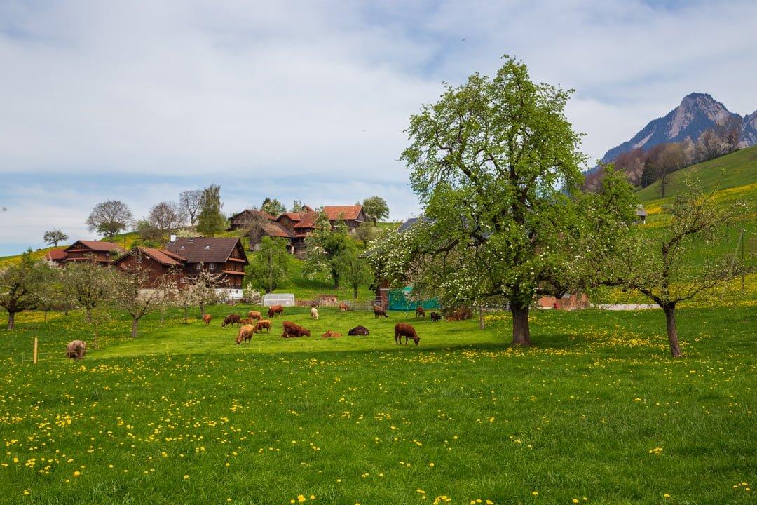 Wanderung Kerns Flüeli - Bauernidylle