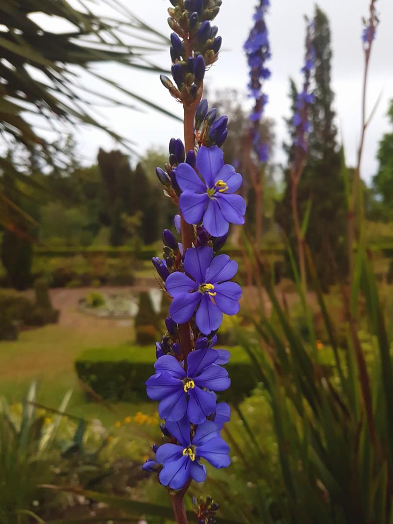 Blumen Garten von Quinta do Palheiro Funchal Madeira