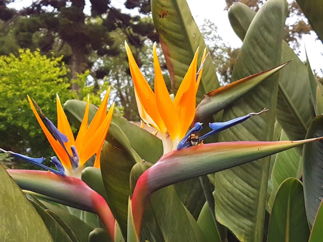 Gärten von Quinta do Palheiro Funchal Madeira