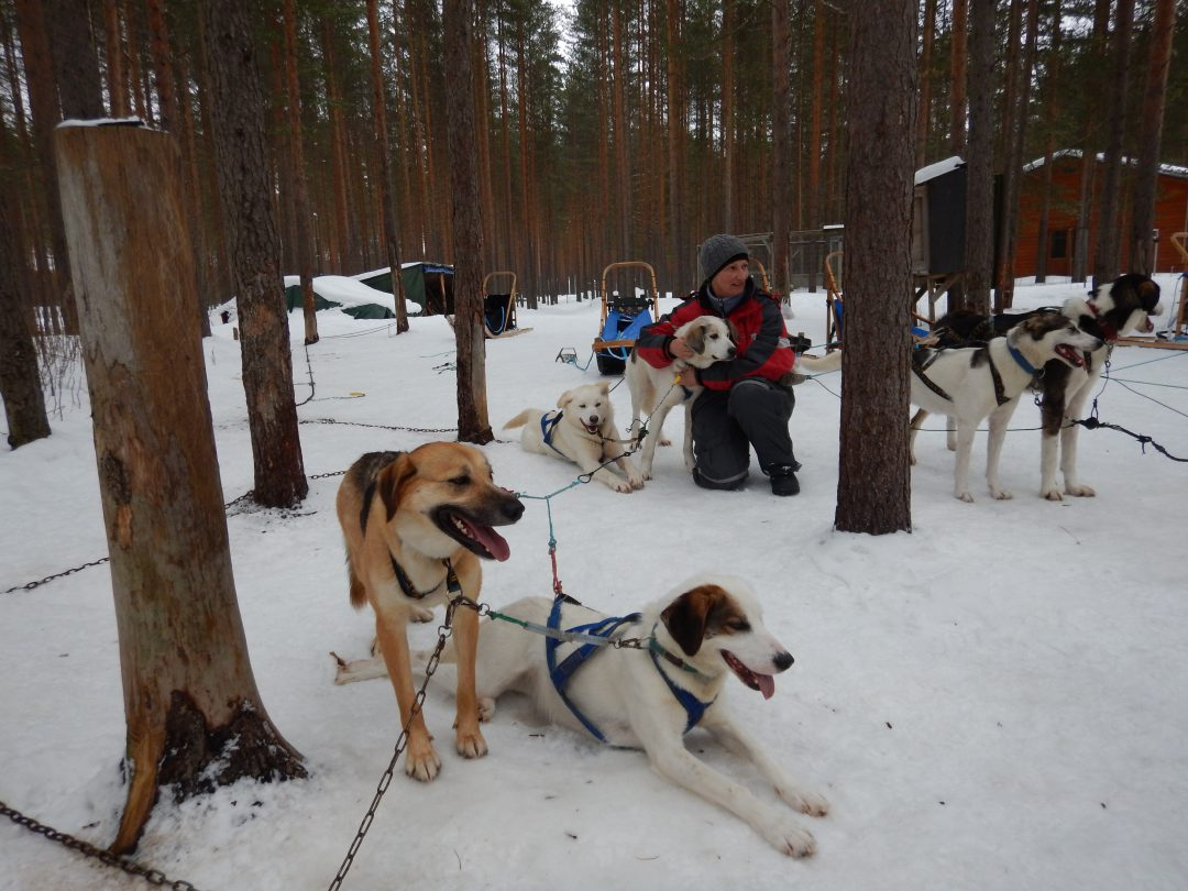 Husky's on duty Eräkeskus Lodge Finnland