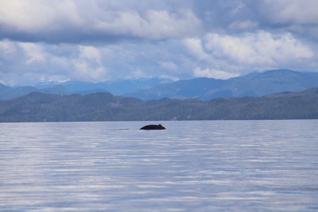 Kajaktour Wale Vancouver Island Kanada
