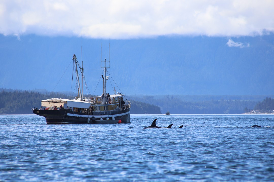 Orcas, Vancouver Island, Kanada