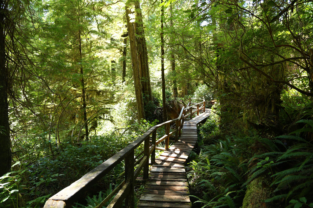 Rainforest Hiking Trail im Pacific Rim National Park, Vancouver Island, Kanada