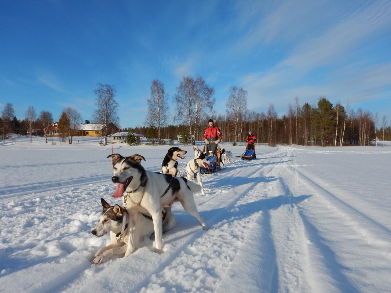 Hundeschlittentouren Karelien Eräkeskus Lodge