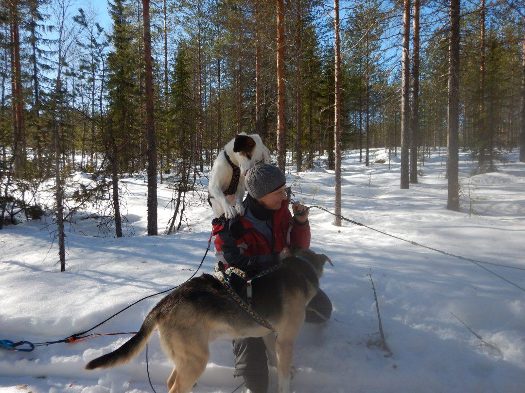 Husky Eräkeskus Lodge Finnland