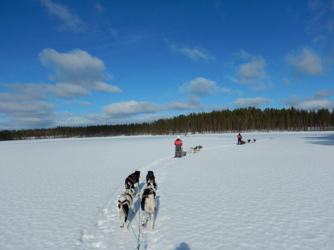 Hundeschlittentouren in Karelien Eräkeskus Lodge
