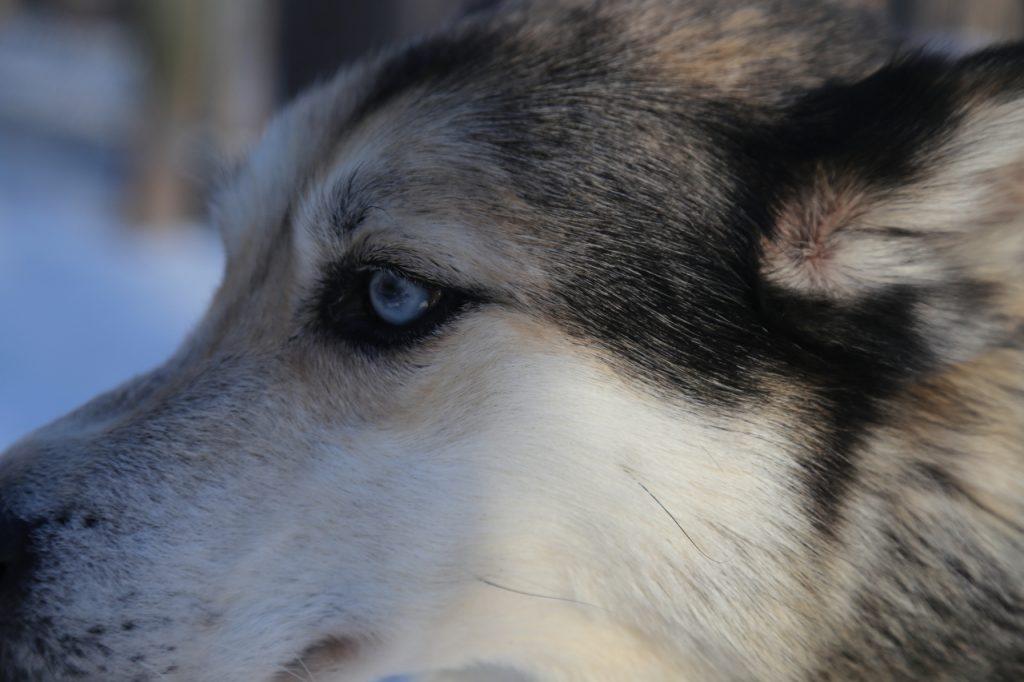 Hundeschlitten Eräkeskus Lodge Finnland