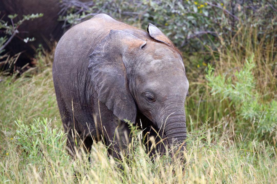 Etosha Nationalpark Baby Elefant Namibia