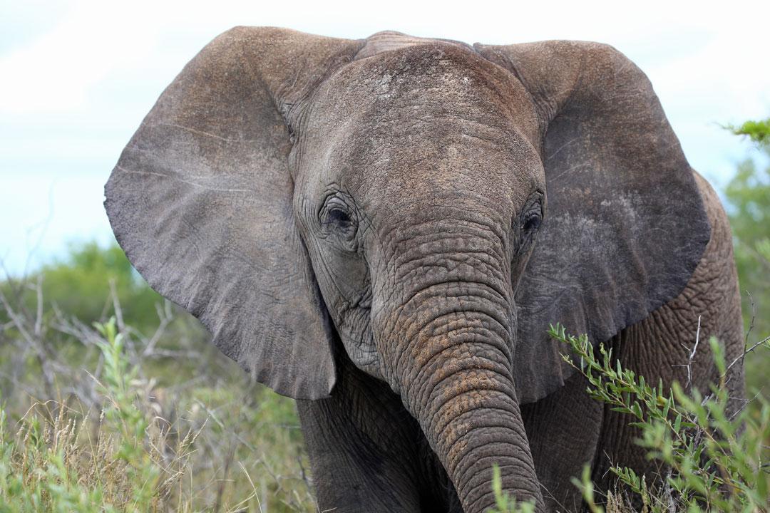 Etosha Nationalpark Elefant Namibia