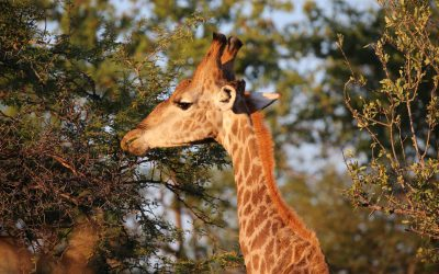 Etosha Nationalpark – Namutoni Camp