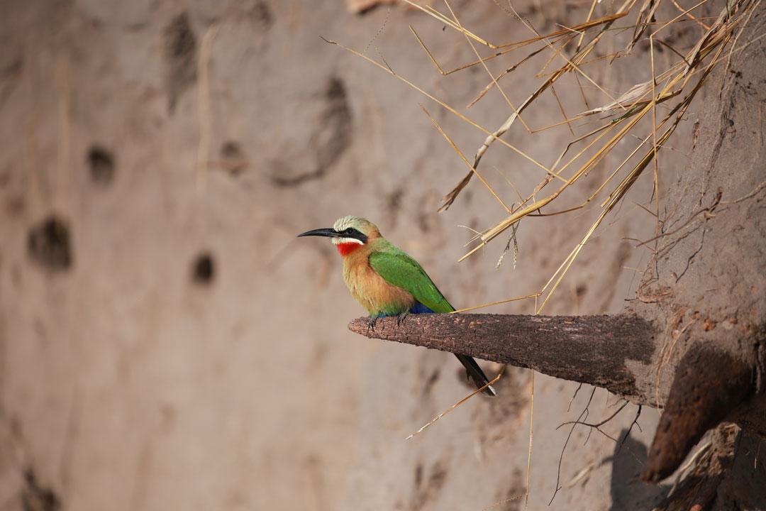 Mashi River Safari Bienenfresser Namibia
