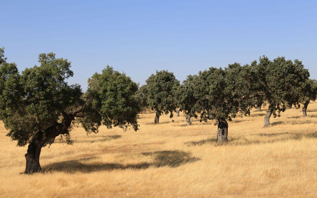 Naturpark Sierra Norte de Sevilla – eine Region zum entschleunigen