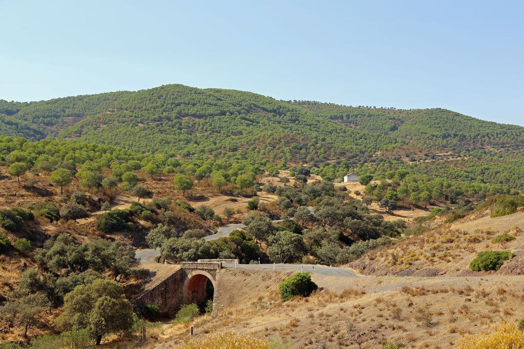 Auf der A447 Richtung Alanis, Naturpark Sierra Norte de Sevilla, Andalusien Spanien