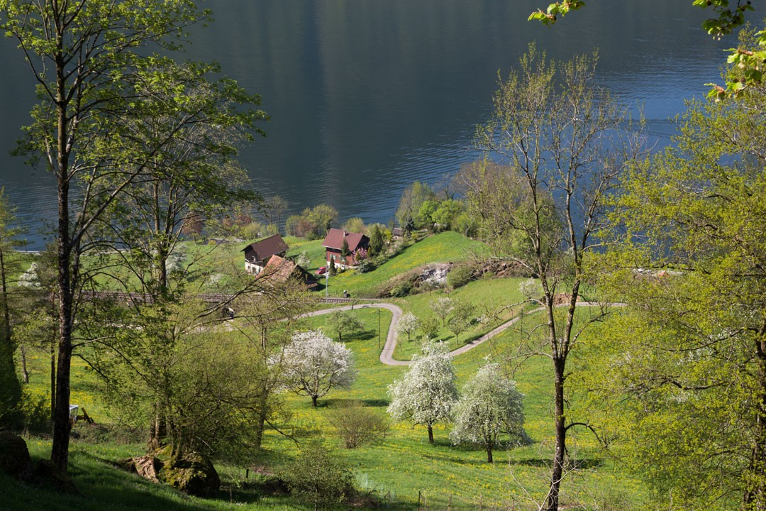 Kirschblütenwanderung Walchwil Arth