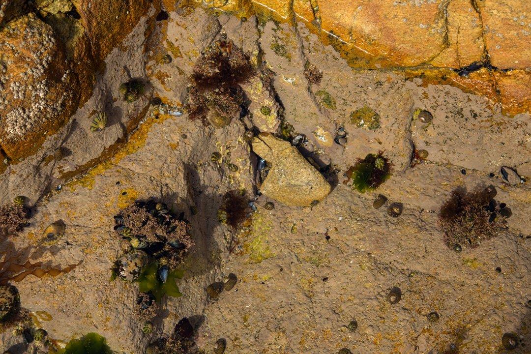 Natürliches Aquarim Küste Cote Sauvage