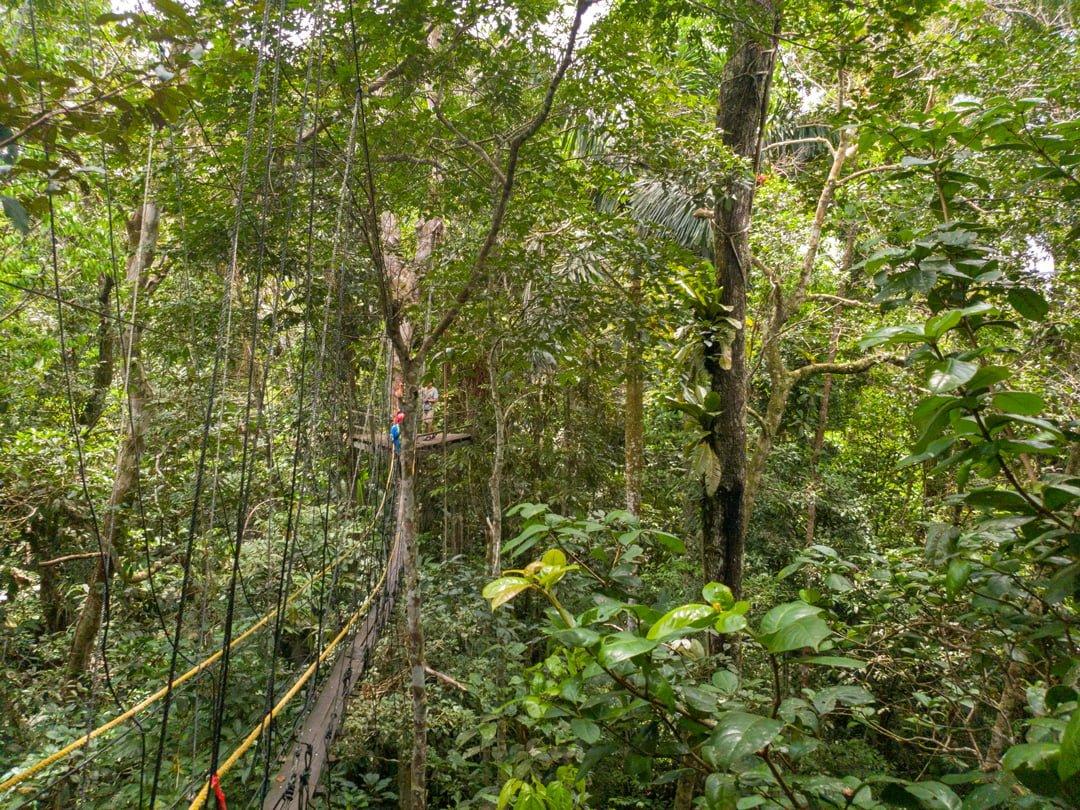 Canopy Tanimboca Leticia Kolumbien