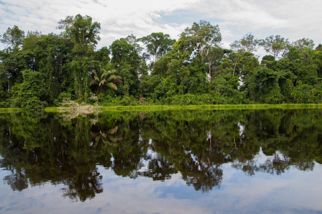 Dschungel Amazonas Kolumbien