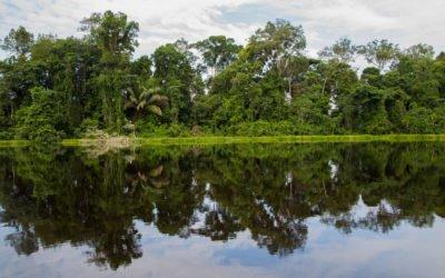 Reisebericht Letica – Amazonas