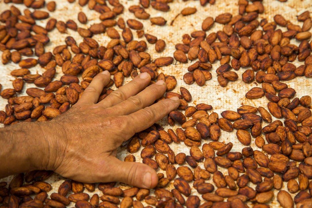 Getrocknete Kakaobohnen Kolumbien