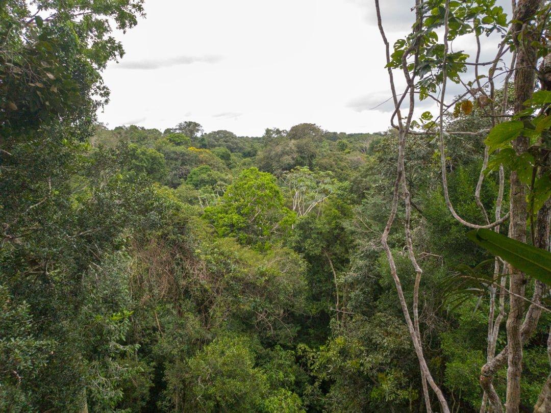 Canopy Tanimboca 35 Meter auf der Plattform