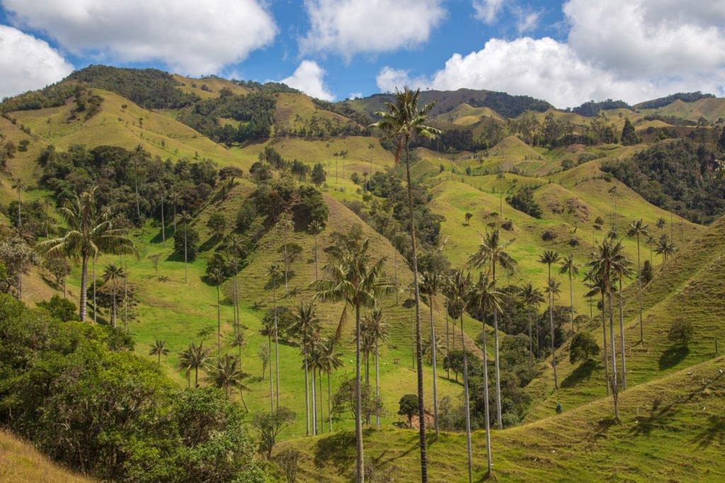 Wachspalmental Samaria Caldas Kolumbien