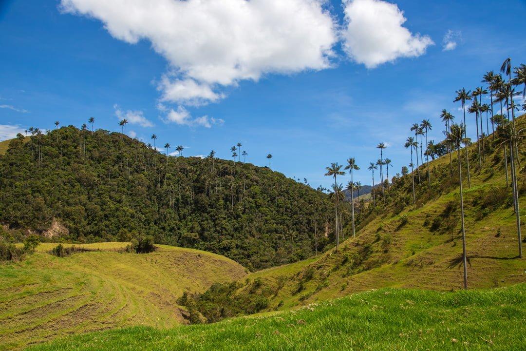 La-Samaria-Wachspalmental-Kolumbien