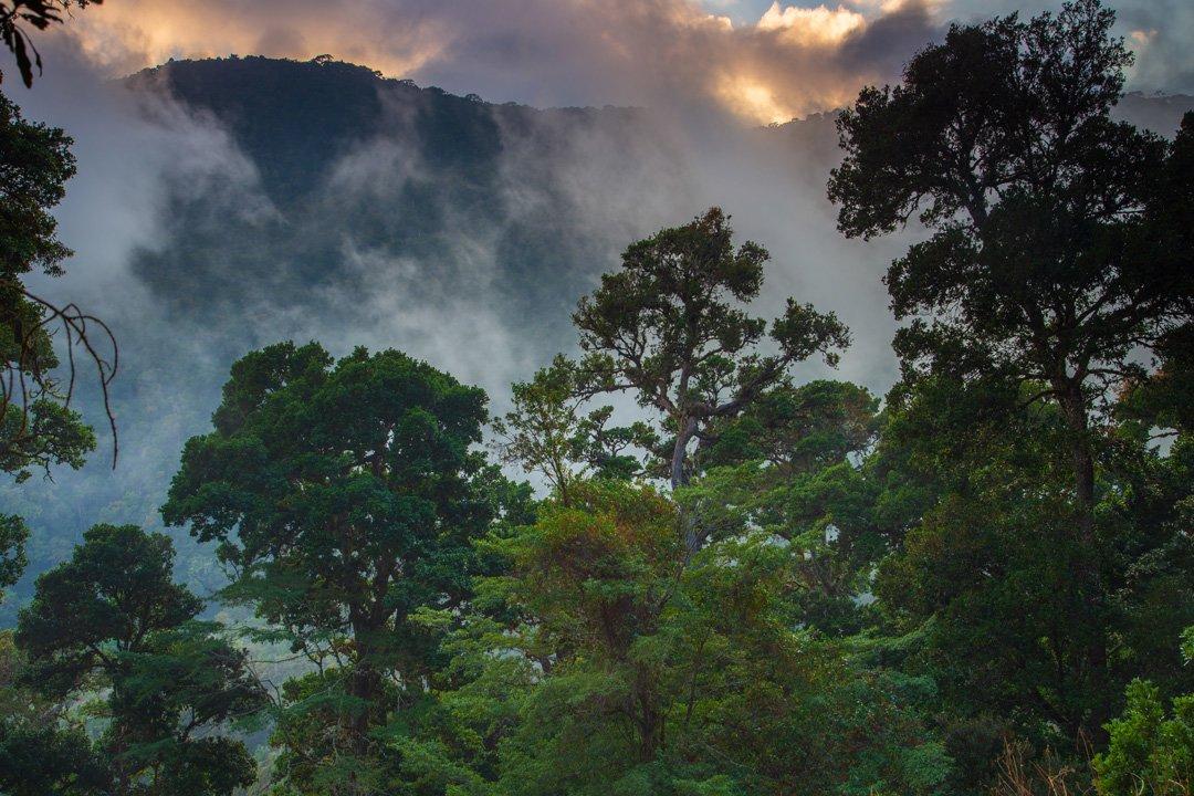 Dantica Cloud Forest Lodge Costa Rica
