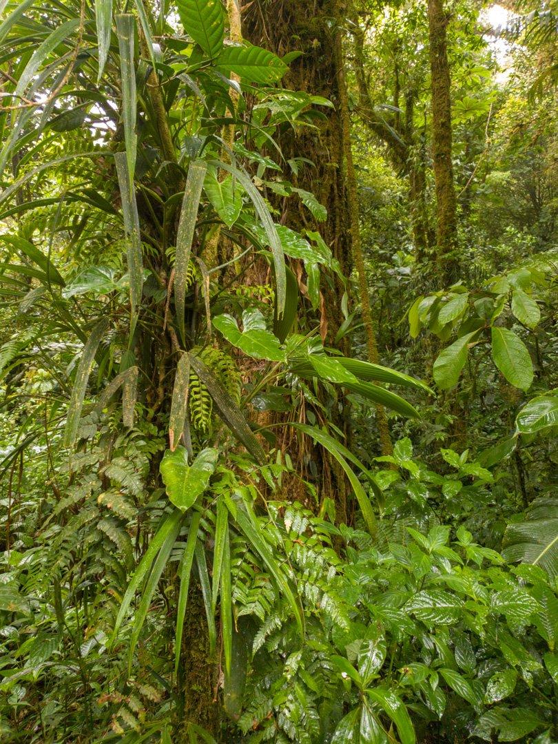 Monteverde Naturpark Costa-Rica