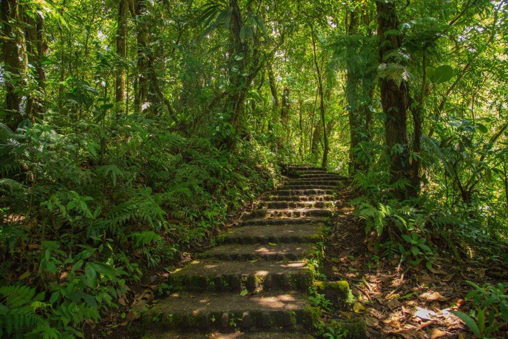 Selvature Naturpark Monteverde Costa Rica