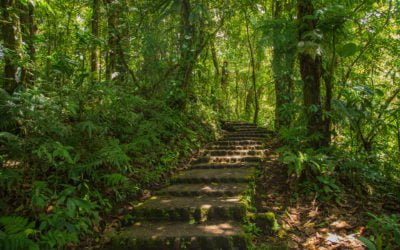 Santa Elena – Selvatura & Monteverde Naturpark – über Hängebrücken durch den Nebelwald