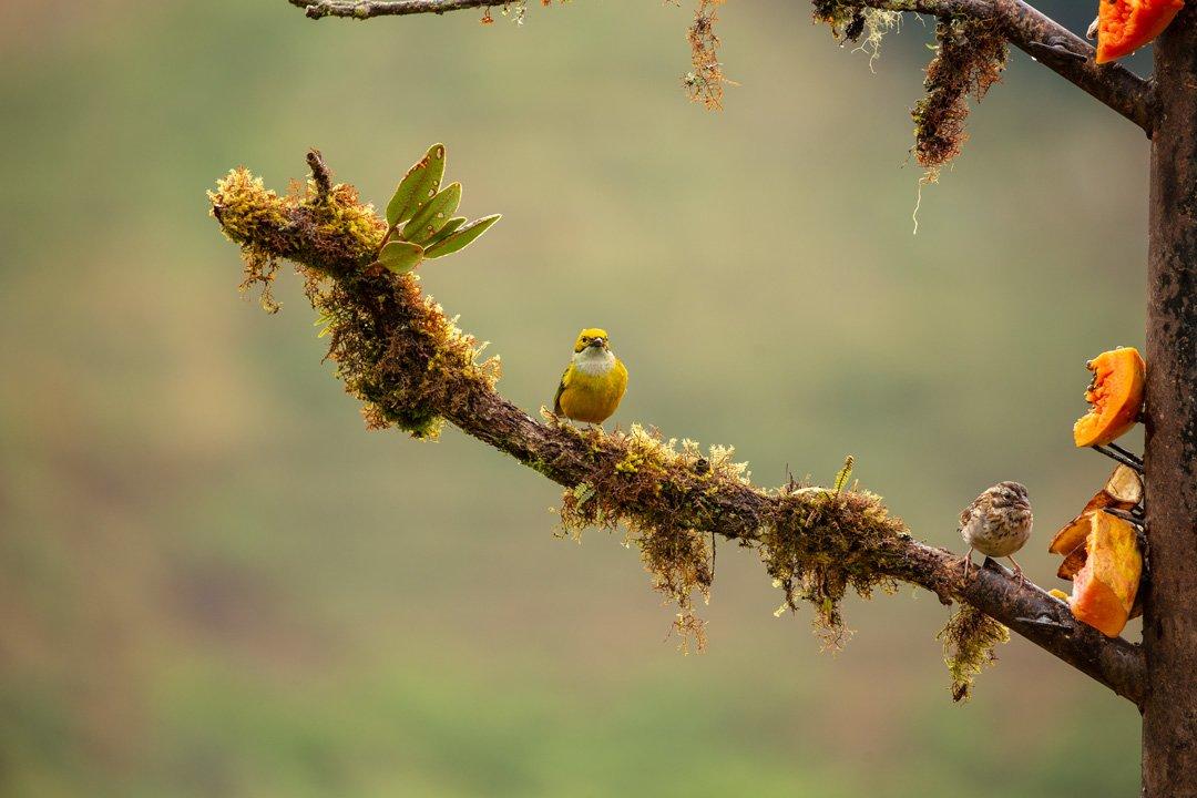 Vogelbeobachtung San Geradode Dota Costa Rica
