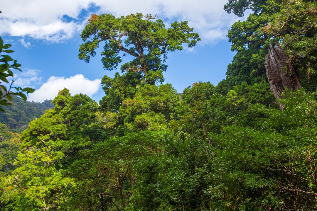Dantica Cloud Forest