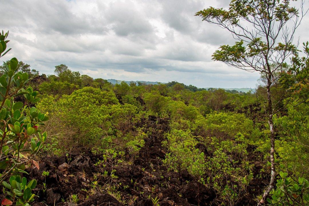 Lavafeld Arenal Vulkan Nationalpark Costa Rica