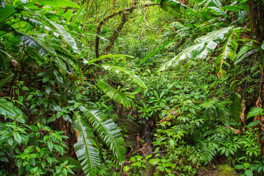 Silencio Lodge Dschungel Costa Rica