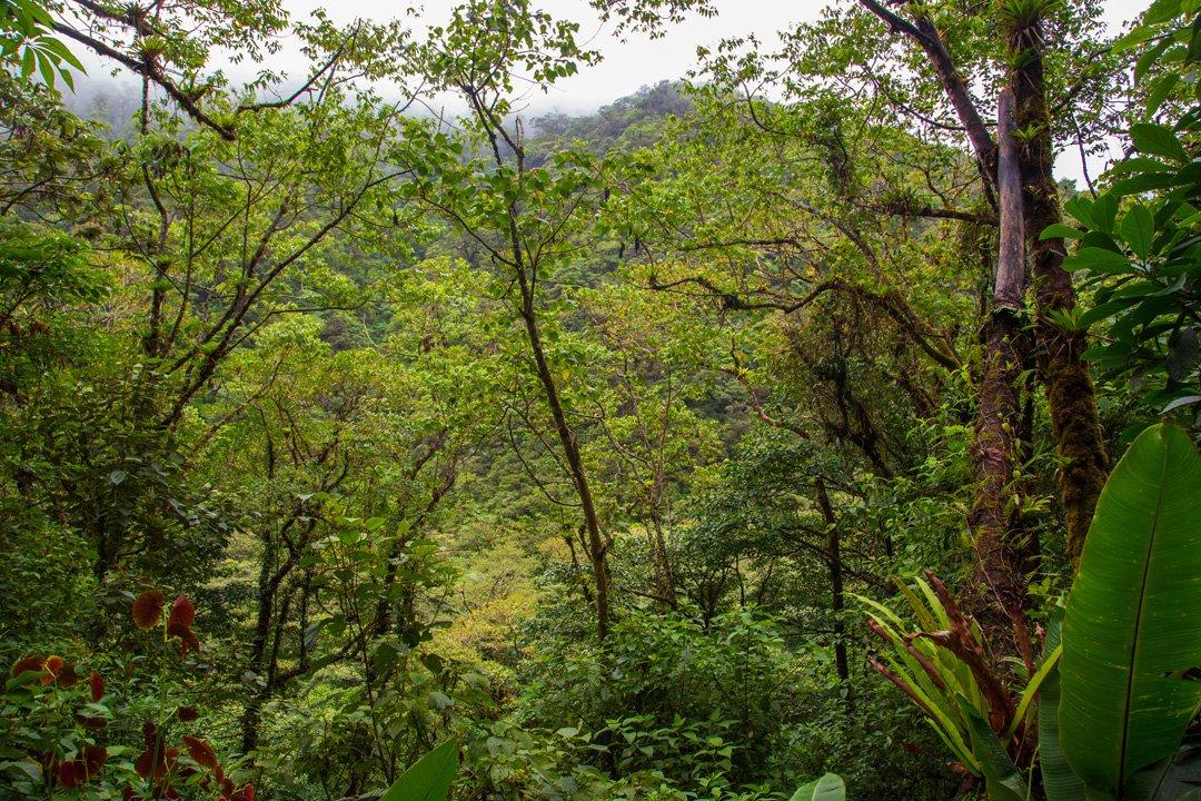 El Silencio Lodge Nebelwald Bajos del Toro Costa Rica