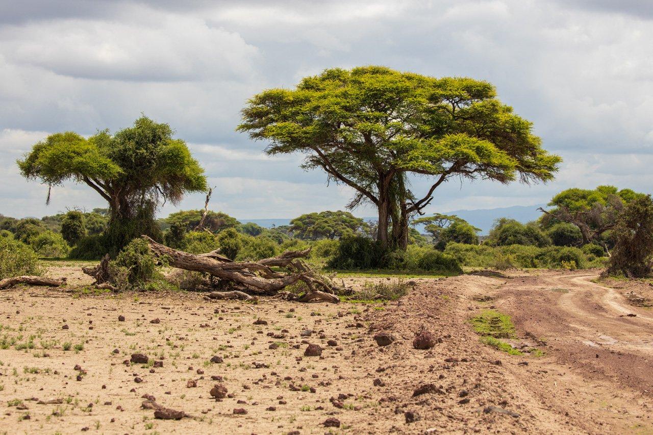 Offroad im Amboseli Nationalpark Kenia