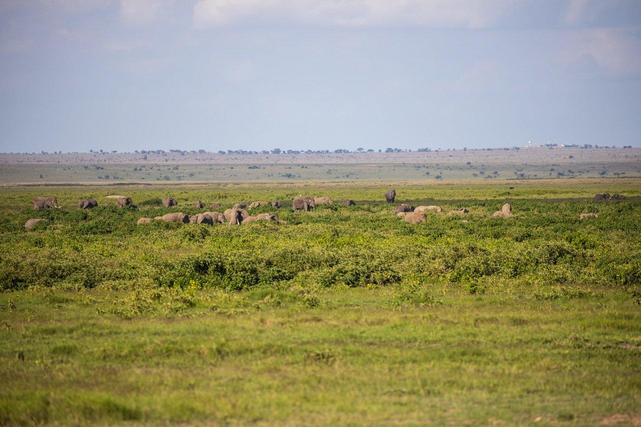 Elefanten im Sumpfgebiet Amboseli Nationalpark