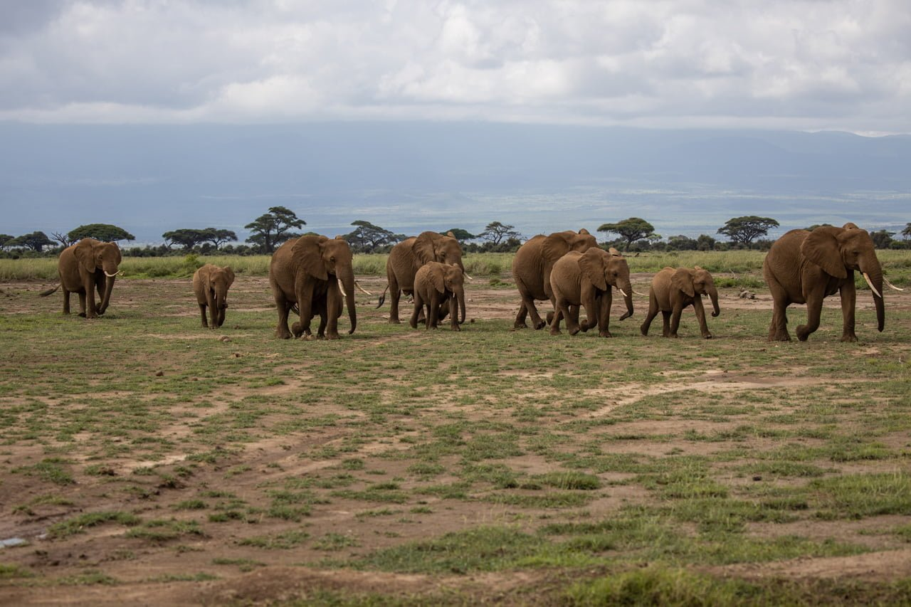 Elefantenkolone Amboseli Nationalpark