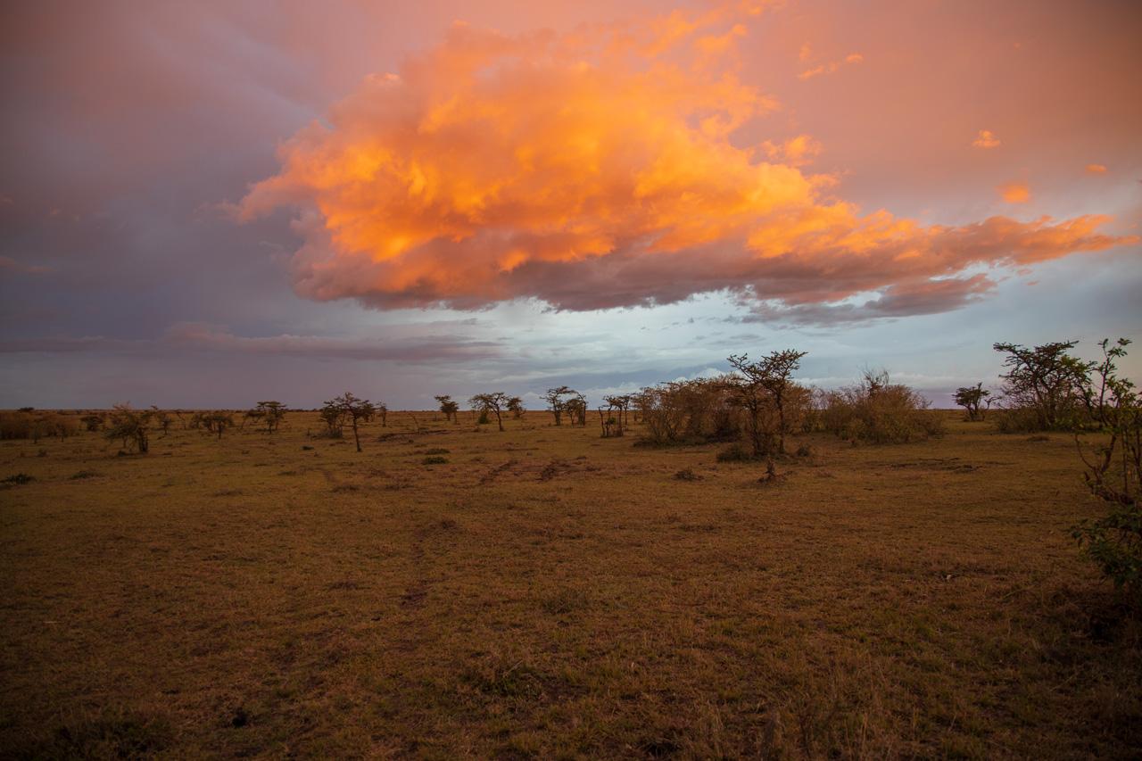Abendstimmung in der Massai Mara