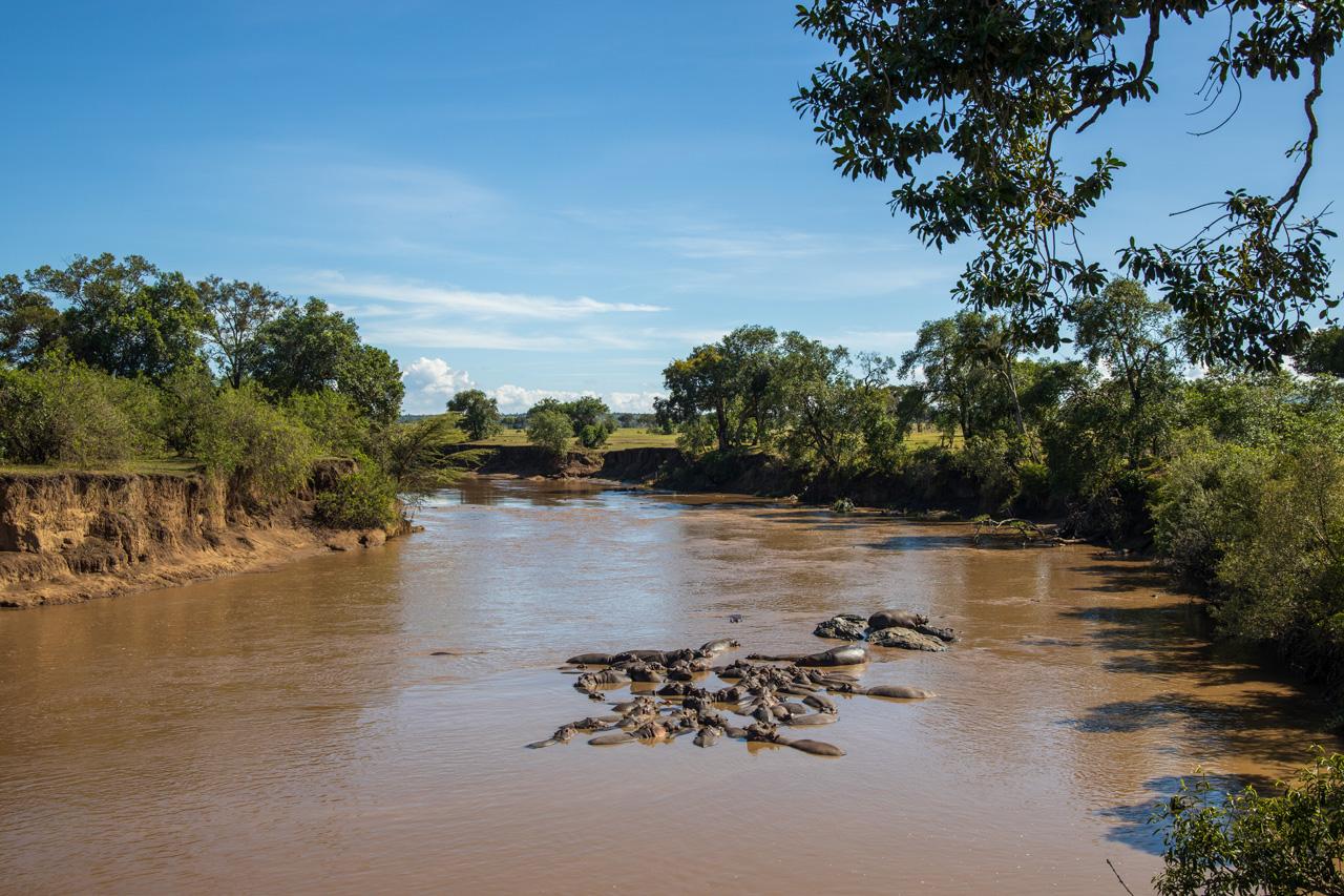 Flusspferde Massai Mara