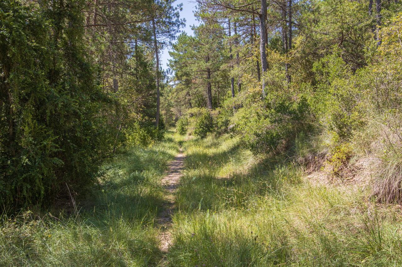 Bike Trail Entlang Bach El Riard